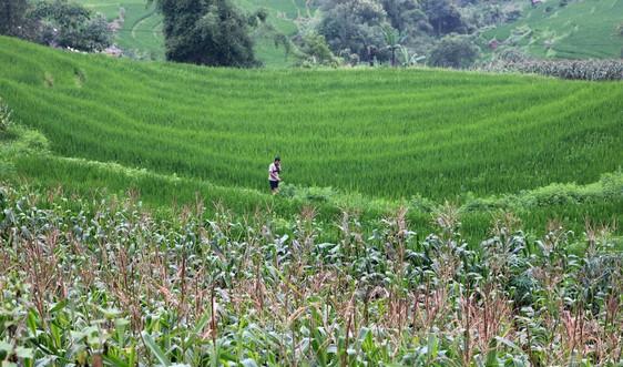 Mức bồi thường khi người dân bị thu hồi gần 30% diện tích đất nông nghiệp