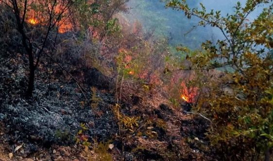 Đà Nẵng: Kịp thời khống chế vụ cháy rừng ở núi Thanh Vinh