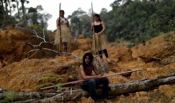 Nạn phá rừng ở Amazon của Brazil chạm mức cao nhất trong một thập kỷ