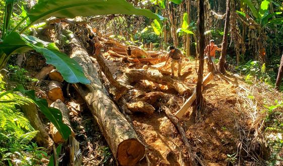 """Thừa Thiên Huế: Kỷ luật nhiều cán bộ xã ở miền núi """"ăn bớt"""" tiền bảo vệ rừng của dân"""