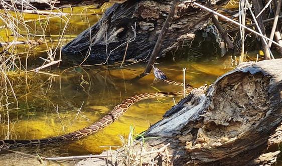 Hà Tĩnh: Thả nhiều cá thể động vật hoang dã quý hiếm về với môi trường tự nhiên
