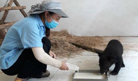 Hà Nội: Tiếp nhận và chăm sóc gần 600 động vật hoang dã