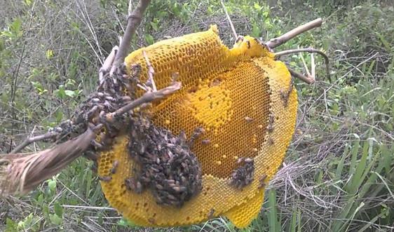 Đốt lửa lấy mật ong bị xử phạt thế nào?
