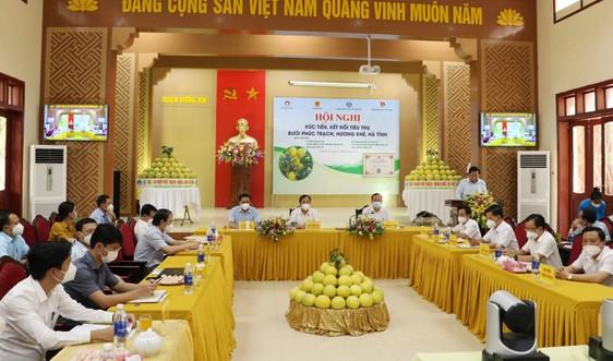 Hà Tĩnh: Nỗ lực kết nối đưa bưởi Phúc Trạch chinh phục thị trường