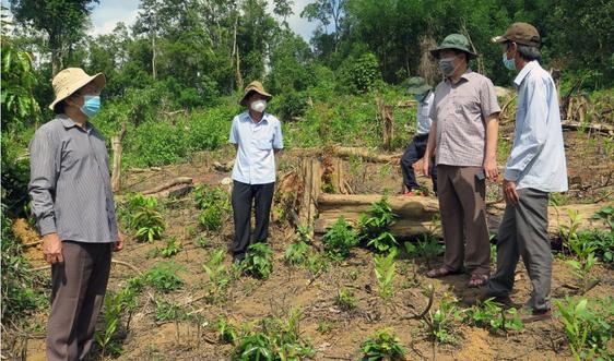 Chủ tịch UBND tỉnh Phú Yên chỉ đạo xử lý vụ phá rừng tại xã Sơn Hội