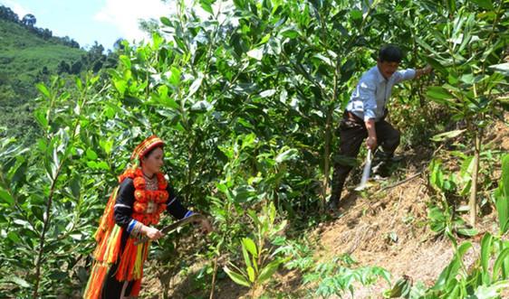 Những luật tục thúc đẩy người dân tộc thiểu số tham gia bảo vệ rừng
