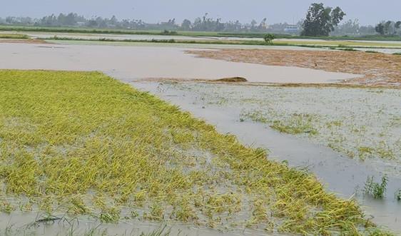 Quảng Ngãi: Nhiều diện tích lúa, hoa màu thiệt hại do bão số 5
