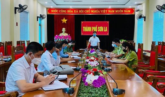 TP Sơn La: Kiểm tra việc khai thác rừng trồng, trồng lại rừng sản xuất sau khai thác