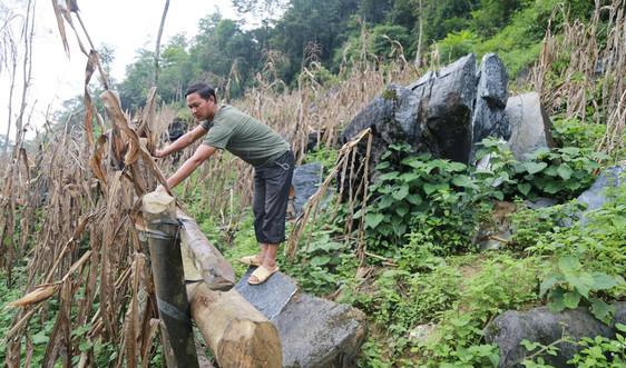 Mương Khương - Lào Cai: Khẩn trương di dời 16 hộ dân ra khỏi vùng đá lăn nguy hiểm