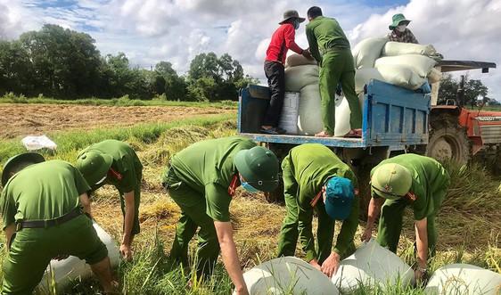 Quảng Trị: Người dân cách ly phòng dịch, Công an xuống đồng gặt lúa giúp
