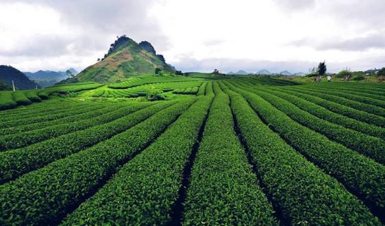 Sơn La: Lập phương án sử dụng đất với diện tích các công ty nông, lâm nghiệp bàn giao về địa phương