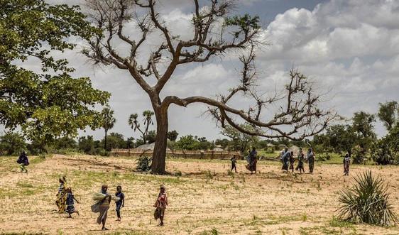 Cần khôi phục cảnh quan đang bị suy thoái của châu Phi