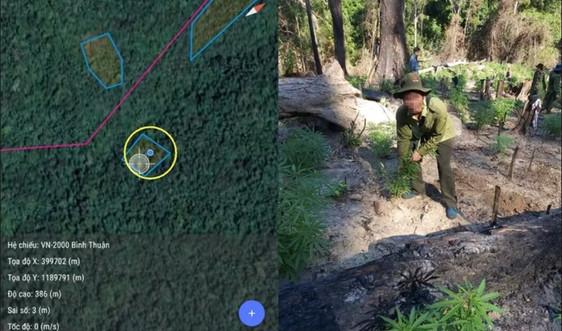 Bình Thuận: Sử dụng ảnh viễn thám để bảo vệ rừng