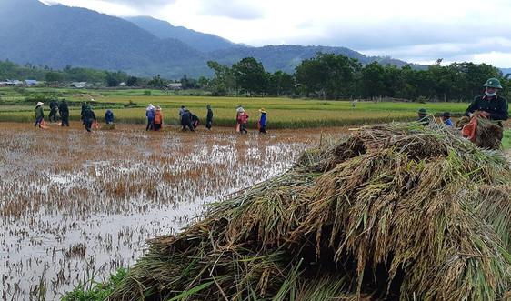 Thắm tình quân dân trên cánh đồng lúa