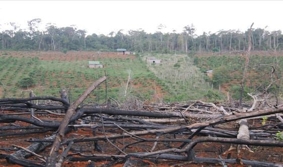 Đắk Nông: Thu hồi hơn 1.200 ha đất rừng của HTX Hợp Tiến