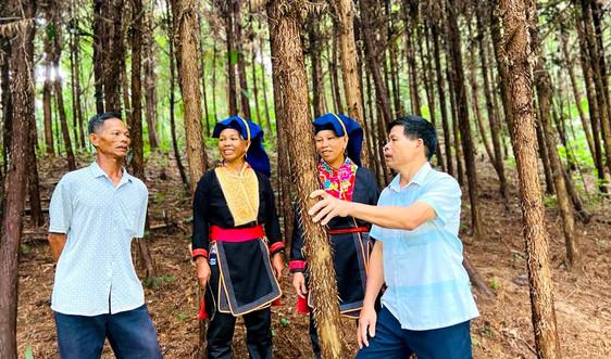 Bà con vùng đồng bào DTTS huyện Ba Chẽ sử dụng hiệu quả tài nguyên đất