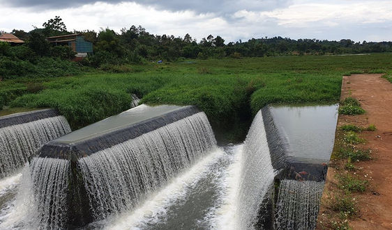 """Đắk Nông: Hơn chục công trình thủy lợi bị """"đảo cỏ di động"""" xâm chiếm"""