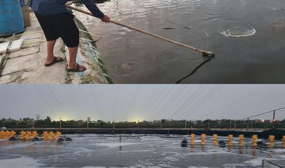 Hải Phòng: Nhiều nông sản tới kỳ thu hoạch bị thiệt hại do bão số 7