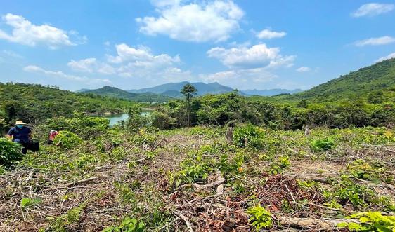 Quảng Bình: Rà soát quỹ đất, đăng ký kế hoạch trồng rừng thay thế năm 2022