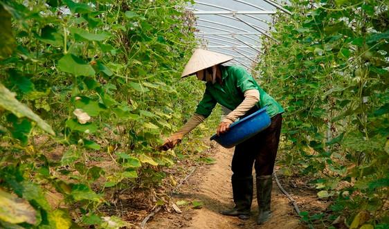 """Tích tụ đất đai ở Thanh Hóa: Đã tháo gỡ được """"nút thắt"""""""