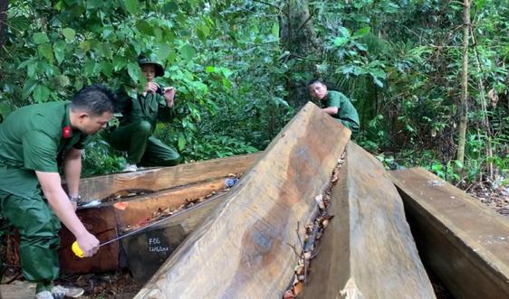 Đắk Lắk: Tình trạng phá rừng diễn biến phức tạp