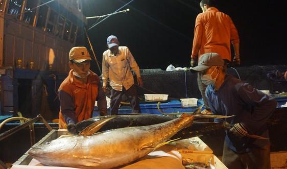 Miền Trung: Cảng cá nhộn nhịp trở lại, ngư dân phấn khởi vươn khơi bám biển