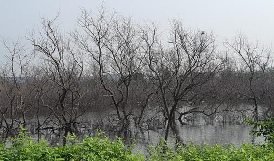 Hải Phòng: Vì sao 5,42 ha rừng cây ngập mặn bị chết hàng loạt?