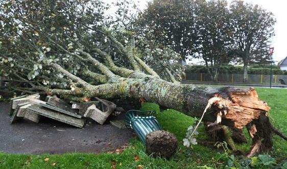 Pháp, Đức, Hà Lan và Bỉ thiệt hại nặng do bão Aurore đổ bộ