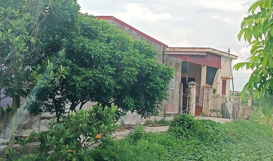 Vụ cho thuê đất trái thẩm quyền ở Ninh Giang, Hải Dương: Huyện chỉ đạo làm rõ phản ánh của Báo TN&MT