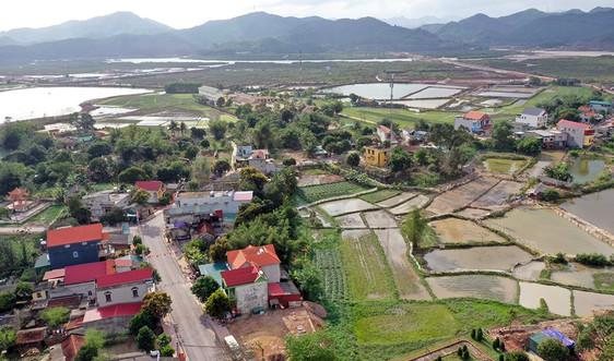 """Bài dự thi """"Cùng giữ màu xanh của biển"""": Hồi sinh rừng ngập mặn Đồng Rui - Bài 2: Rừng đã vui trở lại"""