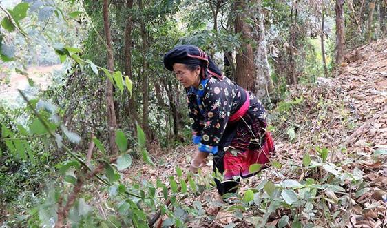 Điện Biên Đông: Phát triển rừng nhờ chính sách