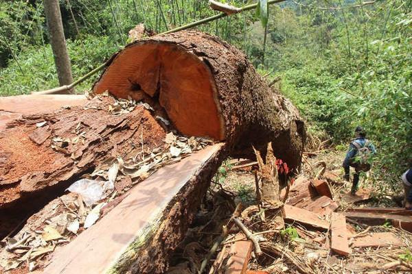 Quảng Nam: Kỷ luật nhiều cán bộ huyện Nam Giang do để xảy ra mất rừng, khoáng sản