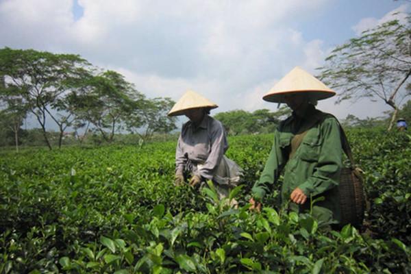 Bộ TN&MT đề xuất 7 giải pháp quản lý đất nông, lâm trường