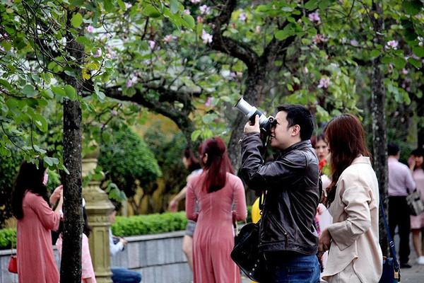 Sắc màu hoa ban rực rỡ thu hút người dân Thủ đô