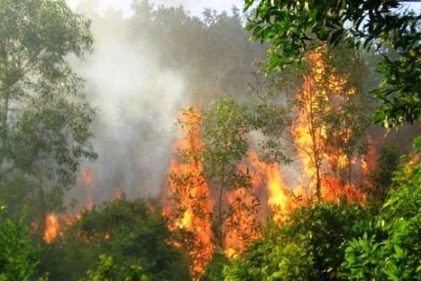 Cảnh báo nguy cơ cháy rừng do nắng nóng gay gắt