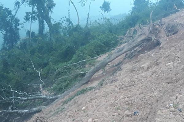 Nghệ An: Cần xử lý nghiêm việc phá rừng phòng hộ để trồng keo