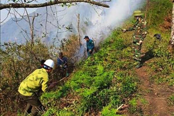 Lào Cai: Tăng cường công tác quản lý phòng chống cháy rừng