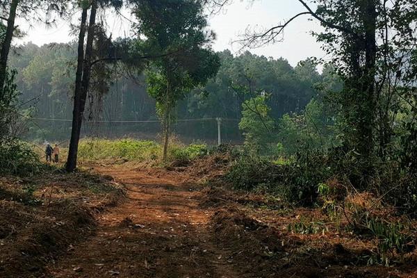 Quảng Trị: Xây dựng các tuyến đường Lâm nghiệp huyện Gio Linh