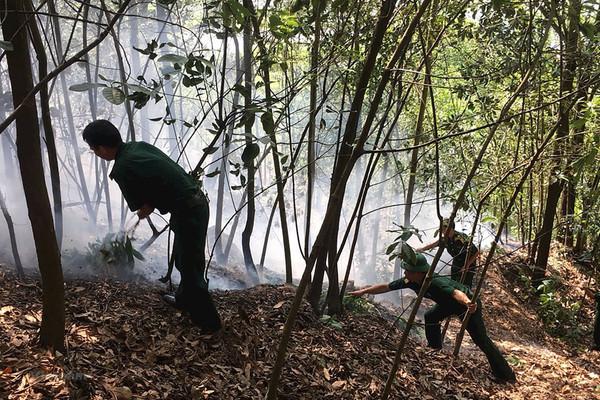 Hải Phòng: Tăng cường các biện pháp cấp bách phòng – chống cháy rừng