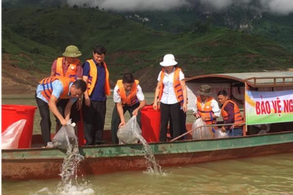 Tiếp tục thả hơn 100.000 con cá giống xuống lòng hồ thủy điện Sơn La
