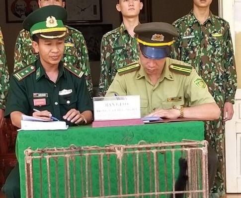 Đồn Biên phòng Mường Lạn bàn giao 1 cá thể Vượn cho lực lượng kiểm lâm