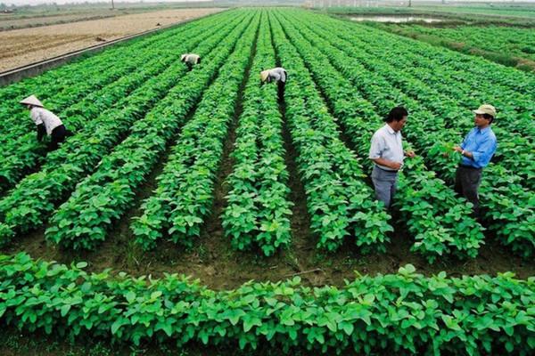 Căn cứ xác định người trực tiếp sản xuất nông nghiệp