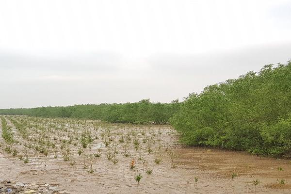 Thanh Hóa: Kế hoạch hành động ứng phó với biến đổi khí hậu, tầm nhìn đến năm 2050
