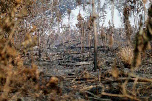 Nạn phá rừng ở Amazon của Brazil giảm trong tháng thứ 3, nhưng vẫn ở mức cao