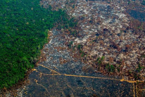 Nạn phá rừng Amazon của Brazil tăng vọt lên mức cao nhất trong 12 năm