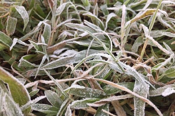Sơn La cảnh báo nguy cơ băng giá và sương muối