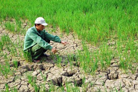 Sóc Trăng: Cập nhật kế hoạch hành động ứng phó với biến đổi khí hậu