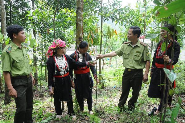 Giải pháp ứng phó BĐKH ở Lào Cai: Trồng, bảo vệ và phát triển rừng bền vững