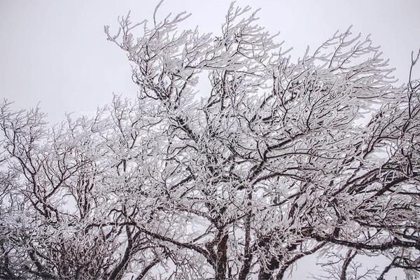 Lào Cai: Nhiệt độ giảm sâu nhiều địa phương  xuất hiện băng tuyết