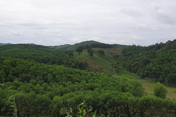 Thanh Hóa: Hỗ trợ khắc phục hơn 500 ha rừng bị thiệt hại